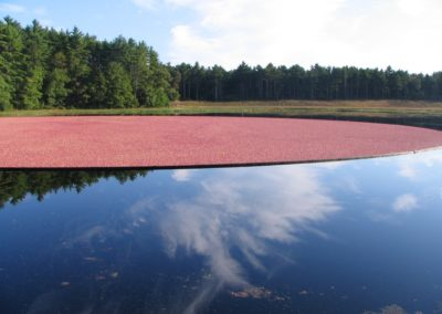 another-cranberry-bog