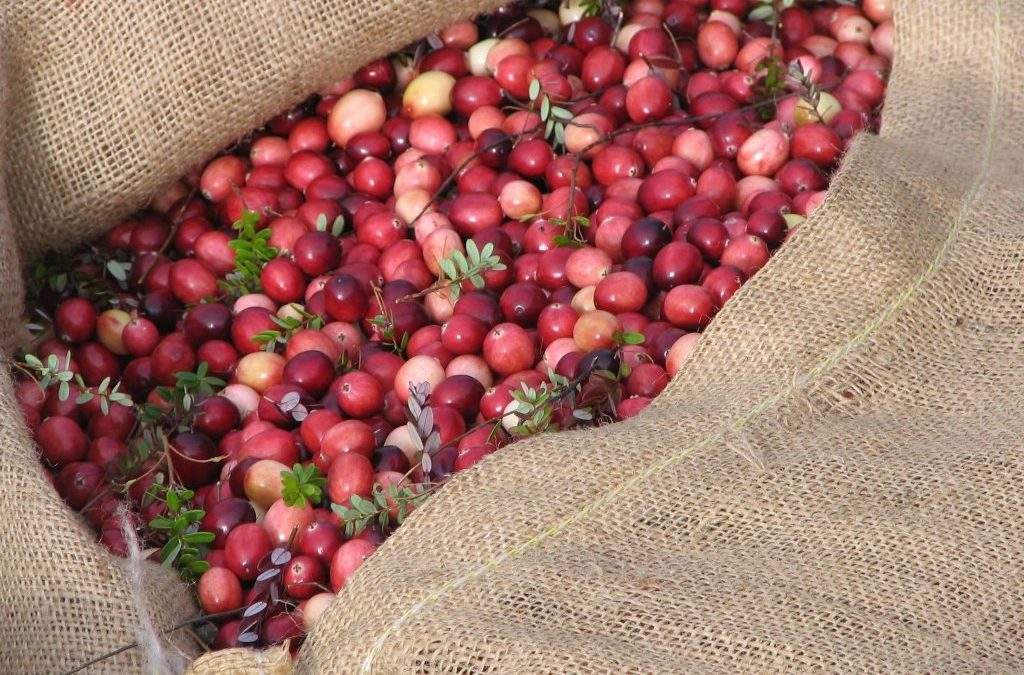 Cran d'Or rises above other cranberry ingredients