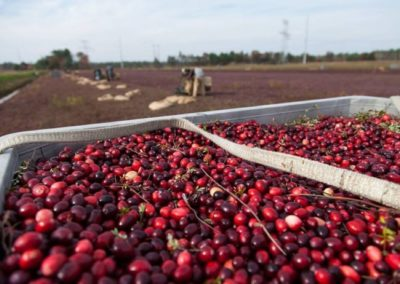 cranberries-in-truck