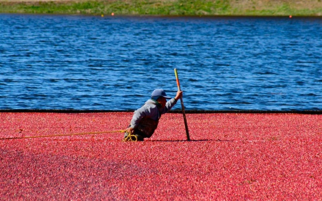 Fruit d'Or: a best-in-class cranberry supplier